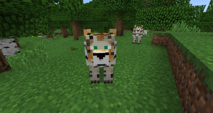 Tigers Addon